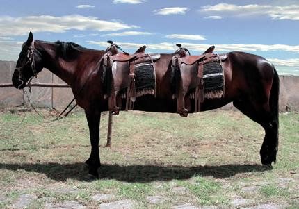 Deux cheval