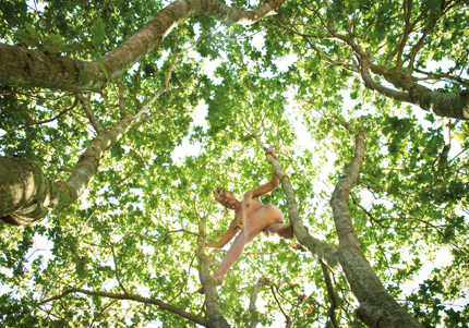De la série L'arbre de vie